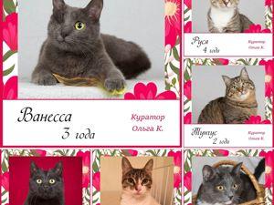 Участники выставки Каждой кошке нужен дом 17!. Ярмарка Мастеров - ручная работа, handmade.
