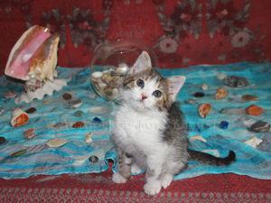 Самый лучший котенок на свете — Лавруша!. Ярмарка Мастеров - ручная работа, handmade.