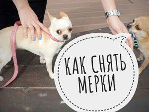 Как снять мерки с вашей собаки. Ярмарка Мастеров - ручная работа, handmade.