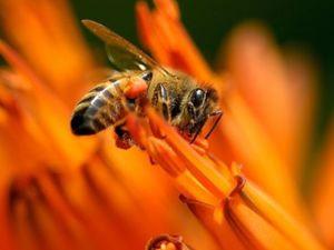 Видео о настройке  «Огненные Пчёлы»  Подъем Кундалини. Ярмарка Мастеров - ручная работа, handmade.