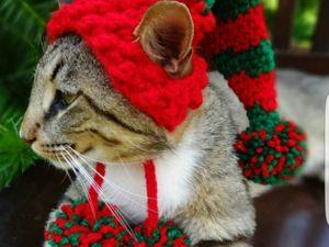 Котики и шапки. Ярмарка Мастеров - ручная работа, handmade.