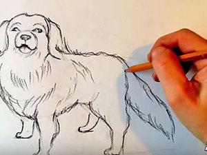 Уроки рисования для начинающих: рисуем собаку карандашом. Ярмарка Мастеров - ручная работа, handmade.