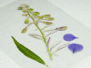 Как просто заламинировать гербарий?. Ярмарка Мастеров - ручная работа, handmade.