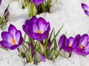 Весна, наконец-то весна!. Ярмарка Мастеров - ручная работа, handmade.