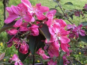 Цветущие сады. Ярмарка Мастеров - ручная работа, handmade.