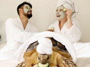 Эта черепаха затмит любую модницу: гламурная жизнь и стильные наряды необычного питомца. Ярмарка Мастеров - ручная работа, handmade.