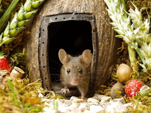 Photographer Built a Village for Mice. Livemaster - handmade