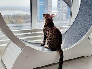 У каждого кота есть своя тараканинка!. Ярмарка Мастеров - ручная работа, handmade.