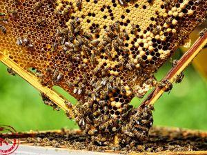 Тайная жизнь пчел: огневка. Ярмарка Мастеров - ручная работа, handmade.