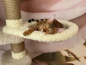 Коты — животные полезные, замурррчательные и ухахатывательные. Ярмарка Мастеров - ручная работа, handmade.
