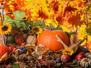 Осенние Скидки !!!!!!. Ярмарка Мастеров - ручная работа, handmade.
