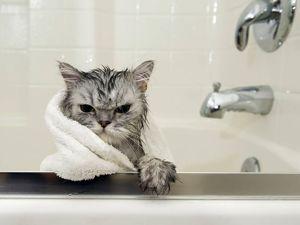 Как помыть кошку в домашних условиях?. Ярмарка Мастеров - ручная работа, handmade.