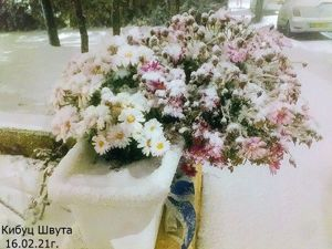 Иерусалим. Цветы и снег. Ярмарка Мастеров - ручная работа, handmade.