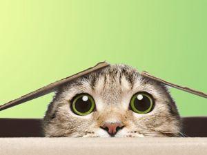 Скидка на сумки с котиками  «Котиков в добрые руки!». Ярмарка Мастеров - ручная работа, handmade.