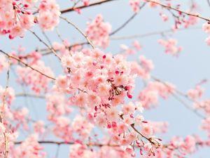 Весна время расцветать!. Ярмарка Мастеров - ручная работа, handmade.