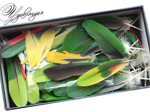 Анонс — скоро распродажа моей коллекции экзотических перьев!. Ярмарка Мастеров - ручная работа, handmade.