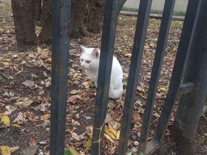 И снова кошки! Вернее, Белый Кот!. Ярмарка Мастеров - ручная работа, handmade.