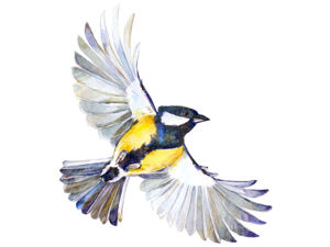 Выставка  «Птицы акварелью». Ярмарка Мастеров - ручная работа, handmade.