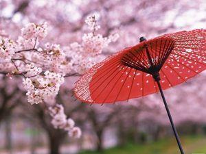 Малоизвестные факты о Японии. Ярмарка Мастеров - ручная работа, handmade.