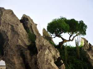 Что такое  «Стабилизированные растения?». Ярмарка Мастеров - ручная работа, handmade.