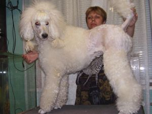 Собачья шерсть- Панацея. Ярмарка Мастеров - ручная работа, handmade.