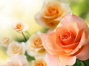Роза — символ любви и очарования. Ярмарка Мастеров - ручная работа, handmade.