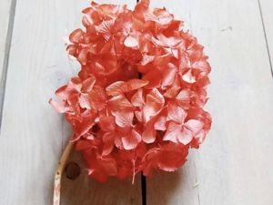 Гортензия  сухоцвет. Ярмарка Мастеров - ручная работа, handmade.