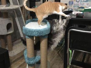 Человеку нужен кот. Ярмарка Мастеров - ручная работа, handmade.