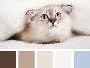 Inspired by Сolor: The Purring World of Cats. Livemaster - handmade