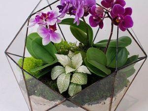 Как ухаживать за флорариумом с Орхидеей. Ярмарка Мастеров - ручная работа, handmade.