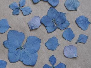 Разные способы засушки растений. Ярмарка Мастеров - ручная работа, handmade.