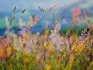 Новый сюжет вышивки  «Полевые травы». Ярмарка Мастеров - ручная работа, handmade.
