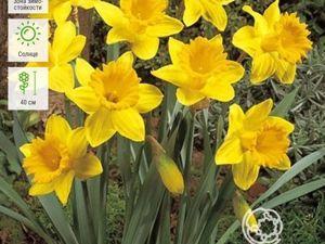 Цветочные истории Нарцисс. Ярмарка Мастеров - ручная работа, handmade.