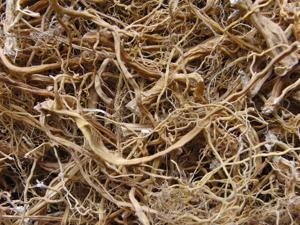Крапивы корень свежего урожая. Ярмарка Мастеров - ручная работа, handmade.