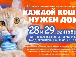 На выставку Каждой кошке нужен дом-13 едет Лаврушка!. Ярмарка Мастеров - ручная работа, handmade.