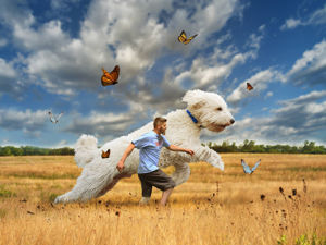 Фотоистории гигантского пса Джуджи, за приключениями которого следят 244 тысячи подписчиков. Ярмарка Мастеров - ручная работа, handmade.