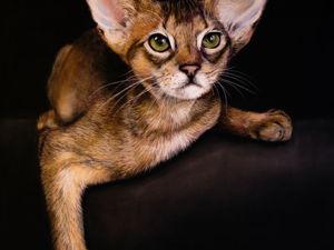 Картины: Портреты животных по фото. Ярмарка Мастеров - ручная работа, handmade.