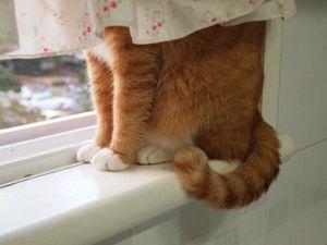 Как наши любимцы кошки нами манипулируют. Ярмарка Мастеров - ручная работа, handmade.
