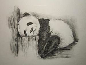 Drawing a Lazy Panda with Charcoal. Livemaster - hecho a mano - handmade.