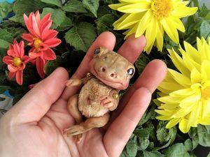 Лягушка Клара  желает познакомиться!. Ярмарка Мастеров - ручная работа, handmade.