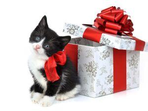 Не все подарки розданы!!!! — в магазине АКЦИЯ со скидками в 35% на все изделия. Ярмарка Мастеров - ручная работа, handmade.