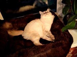 Делаем теплую и мягкую лежанку для кошки из старой шубы. Ярмарка Мастеров - ручная работа, handmade.