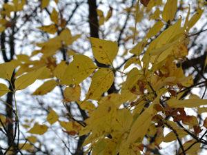 Осенний парк прекрасен! Фотоотчет корзиночек. Ярмарка Мастеров - ручная работа, handmade.