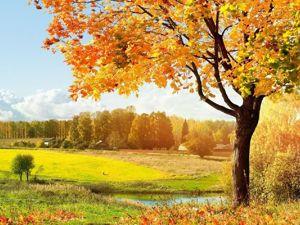 Совместная ярмарка  «Времена года- Осень». Ярмарка Мастеров - ручная работа, handmade.