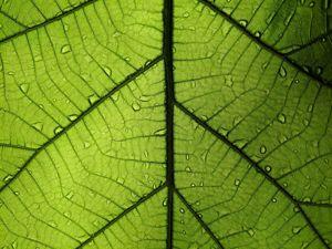 Стволовые клетки растений в косметике. Ярмарка Мастеров - ручная работа, handmade.