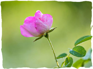 'Вечная весна': аромат любви и молодости!. Ярмарка Мастеров - ручная работа, handmade.
