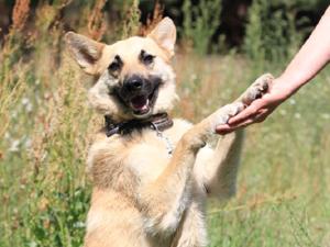 Душевный и солнечный пёс Шарик ищет своего хозяина!!!присмотритесь! Вдруг, это Вы!!!. Ярмарка Мастеров - ручная работа, handmade.
