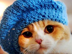 Малахов Ток-шоу . Кот Вася в безрукавке из собачьей шерсти. Ярмарка Мастеров - ручная работа, handmade.