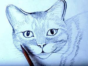 Уроки рисования для начинающих: рисуем кошку карандашом поэтапно. Ярмарка Мастеров - ручная работа, handmade.