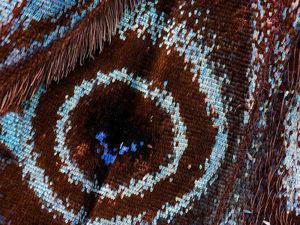 Бабочки, какими их никто не видит: невероятная макро-съемка от Chris Perani. Ярмарка Мастеров - ручная работа, handmade.